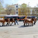 Sevilla. A la Feria (6)